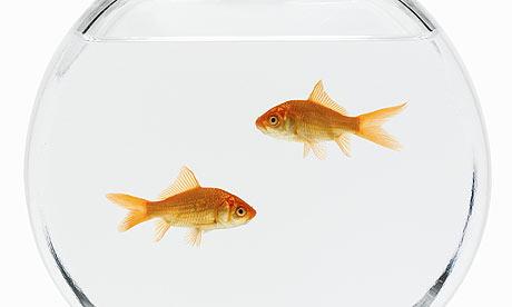 Camp Liberty A Gold Fish Odyssey Iran